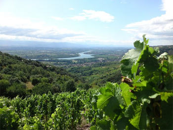 Rhône Vineyards and coasts